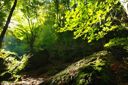 20160328_ba_forest2.jpg