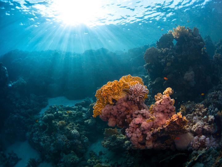 漆黒の深海でサンゴが自ら光り輝くという不思議 [The New York Times]