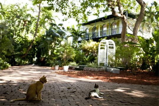 ヘミングウェイが愛した6本指の猫の子孫。ハリケーンから無事生還 [The New York Times]