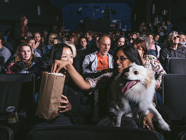 20180401_nyt_dog_1