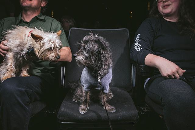 20180401_nyt_dog_2