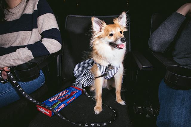 20180401_nyt_dog_5