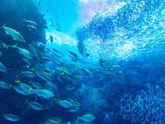 日本の海から魚がいなくなる?! 未来を変える「サステナブルシーフード」とは?