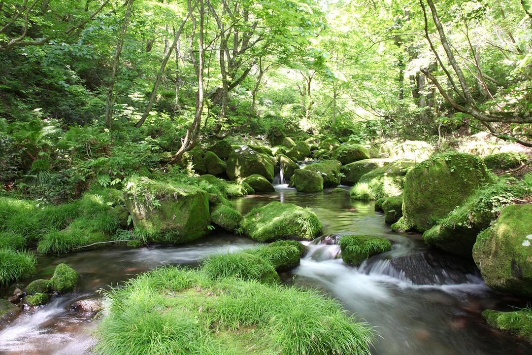 サントリー天然水の森