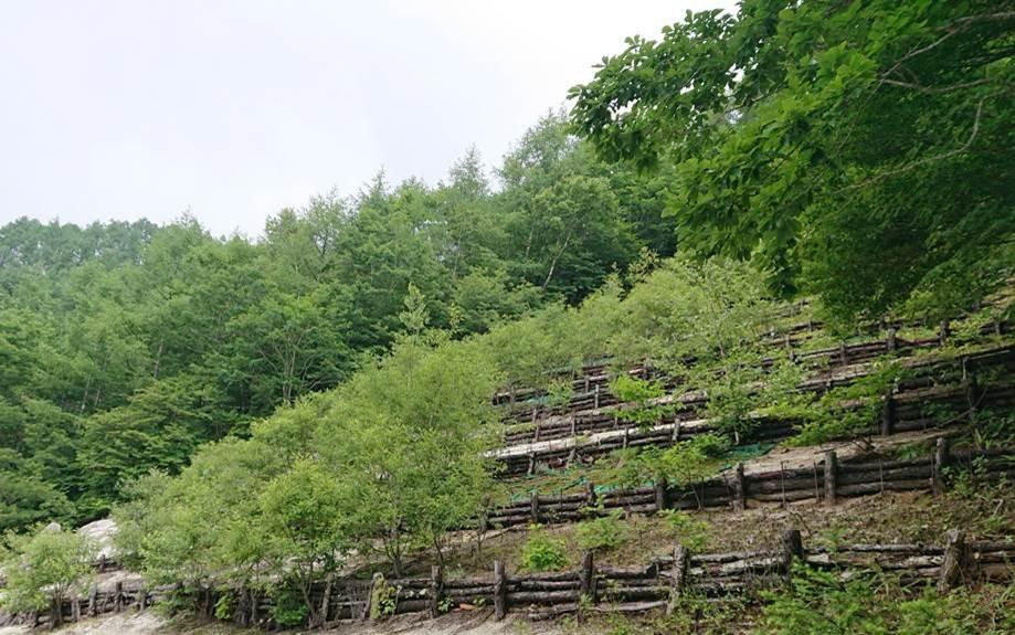 天然水の森