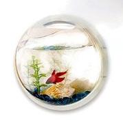 もはやアート作品。ただそこにあるだけで美しい金魚鉢3選