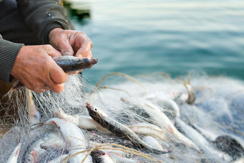 持続可能な漁業を実現するために――水産庁が目指すスマート化への取り組みとは
