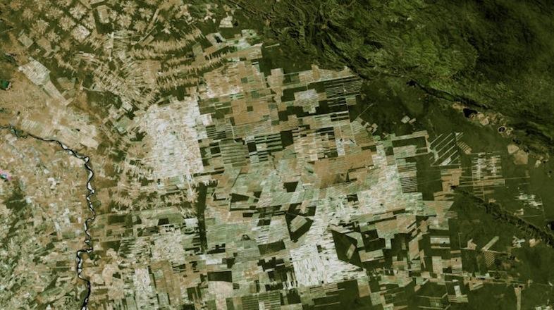 日本の国土の10倍の原生林、この20年で失われたと判明
