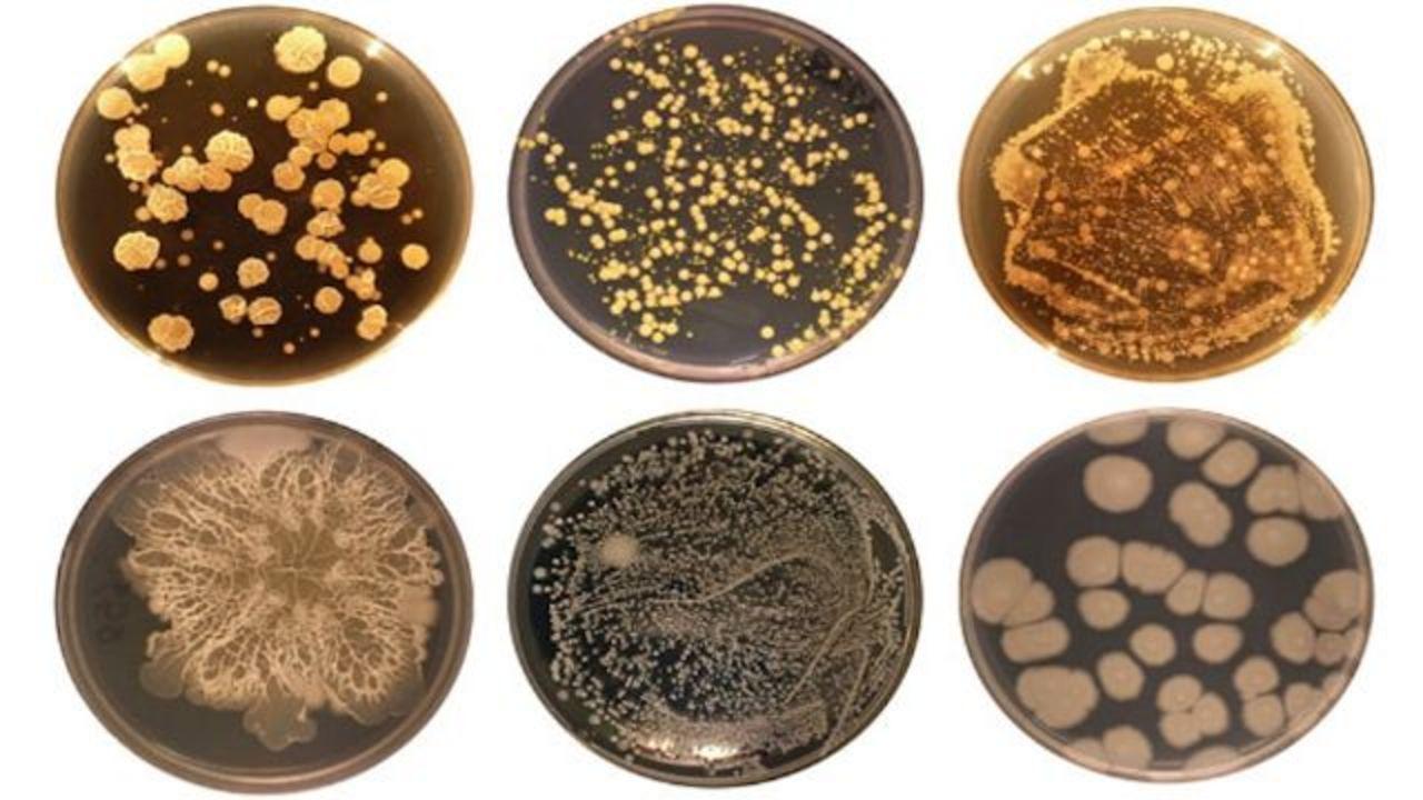 人間のおへそには2368種類の細菌が! 一人ひとり多様な組み合わせ