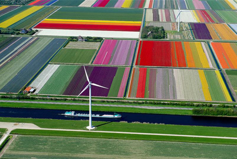 空から見るとこうなるのか! オランダのチューリップ畑