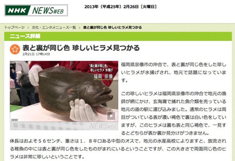 福岡県で奇妙なヒラメが水揚げされる