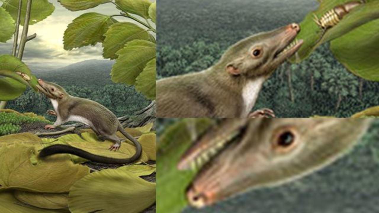 全哺乳類共通の先祖判明! これがあなたのひいひいひい...ばあちゃんのネズミですよ(動画あり)