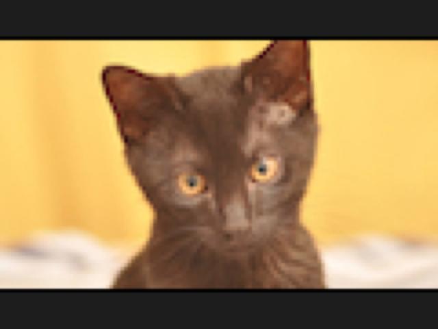 130524_cat_480.jpg