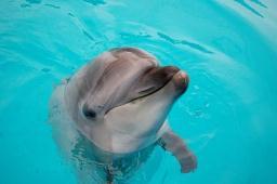 130619-dolphin02.jpg