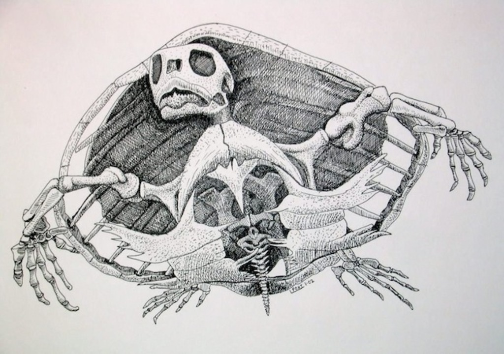 カメ、甲羅の正体あばかれる。ついに進化の謎が明らかに(追記あり)