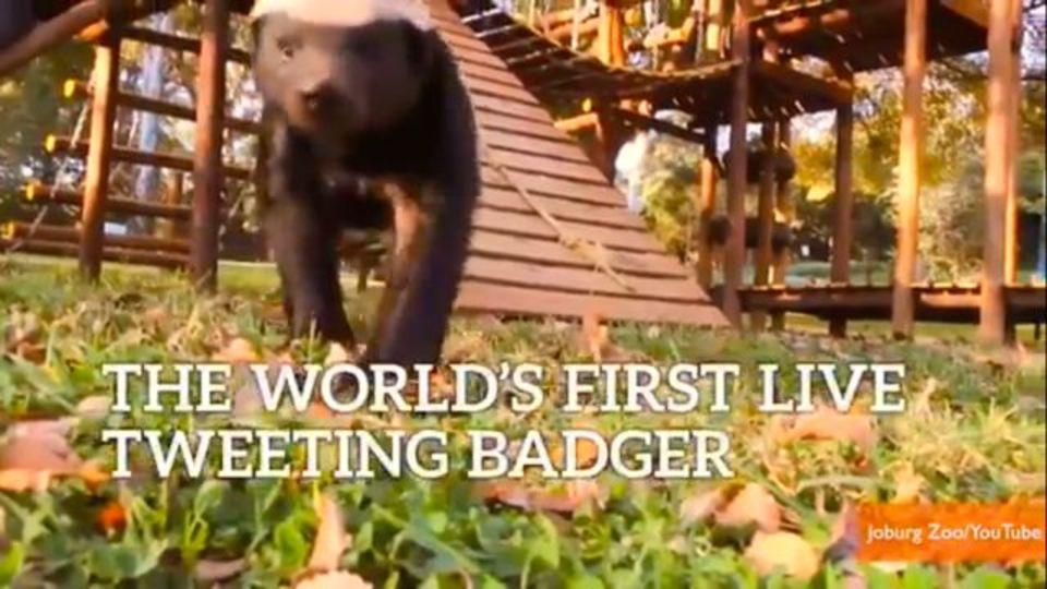 ある動物園のソーシャルメディア・マネージャーがあまりに「野性的」だと海外で話題に