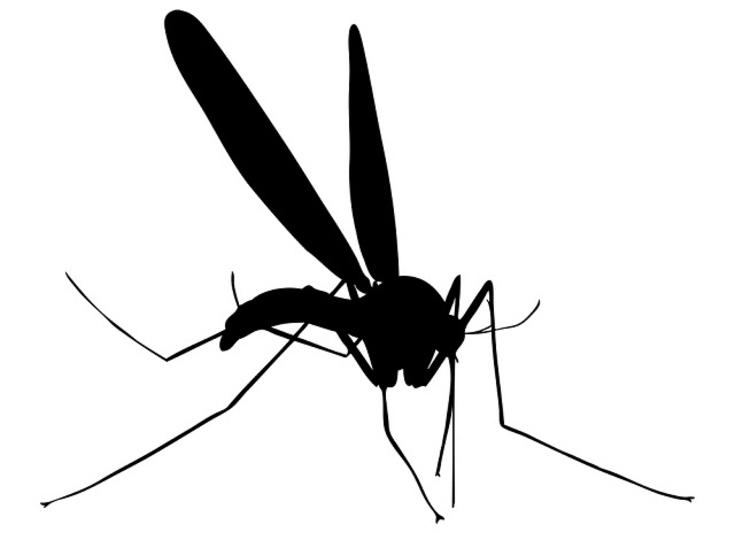 科学的に蚊にさされやすいパターンはこれだ!