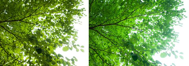 h-green.jpg
