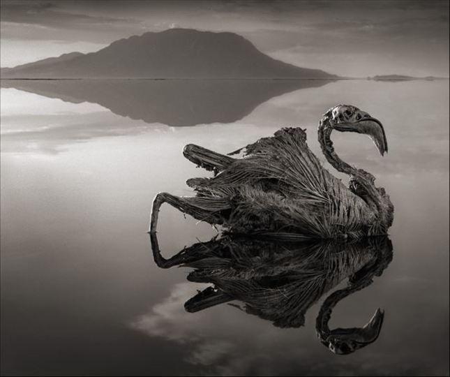 触れるものすべてが石に変わる湖