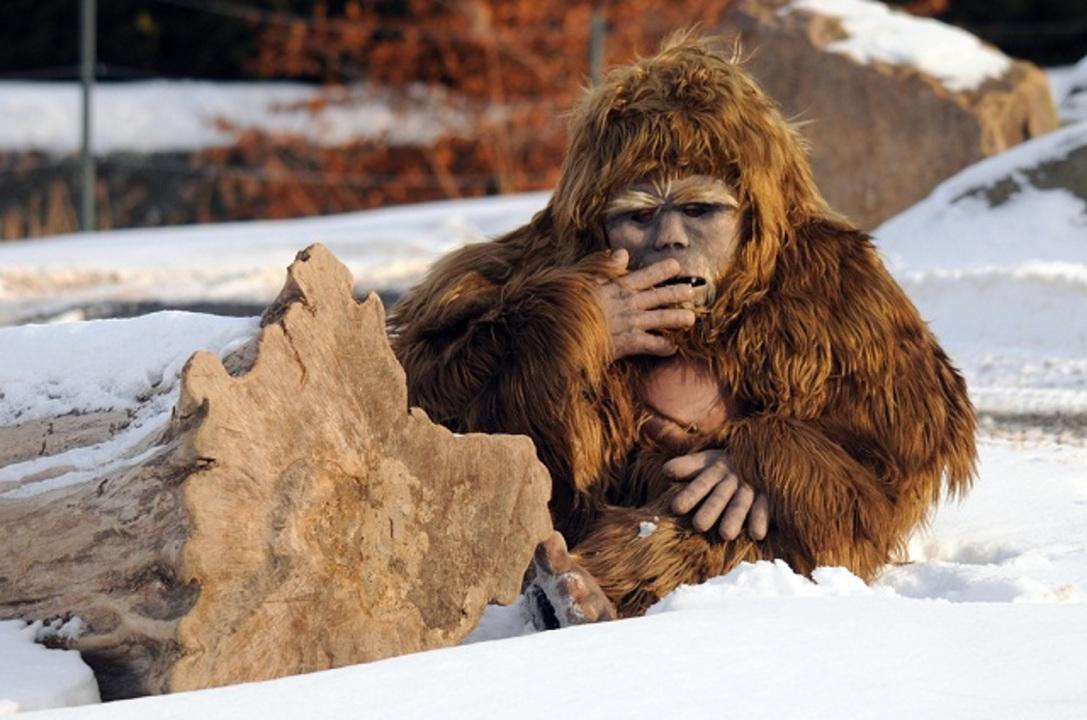 まじですか…雪男(とみられる動物)と古代ホッキョクグマのDNAが一致