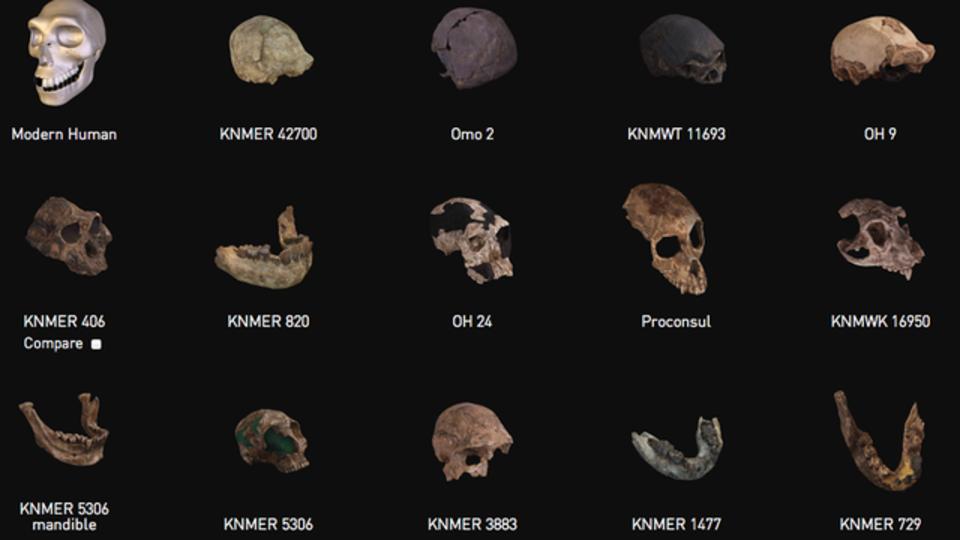 化石の3Dデータが無償ダウンロード、オンラインで眺め倒すこともできますよ