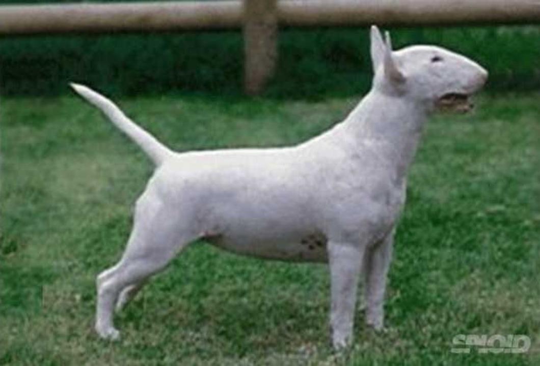 百年の品種「改良」で残念なキリスト状態になった犬たち