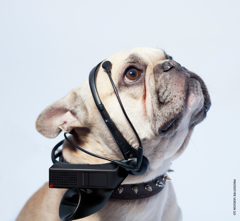 ワンコと話せる? 犬の気持ちを脳波から言葉に翻訳するガジェット