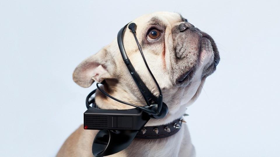 愛犬の脳波を読み取ってコミュニケーション出来ちゃうヘッドセット(動画あり)