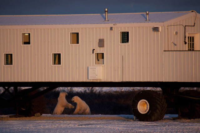 20131221_polar-bear2.jpg