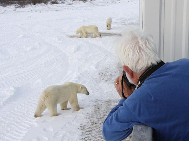 20131221_polar-bear3.jpg