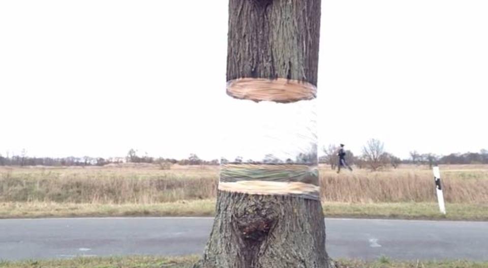 宙に浮かぶ木、目の錯覚か魔法か…
