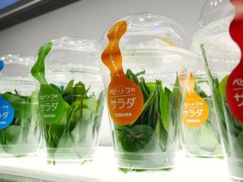 東芝、エレクトロニクス祭典CEATECにて野菜を公開する