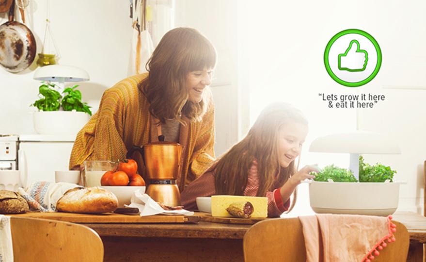 台所で簡単に育てた新鮮野菜が食卓へ