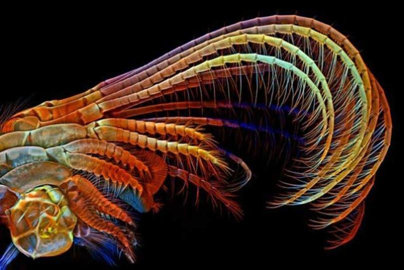 ミクロの世界の2014年、今年のベスト顕微鏡写真