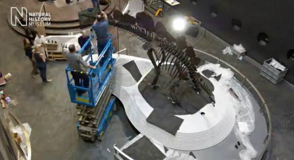 史上最も完全体に近いステゴサウルスの骨、組立の様子