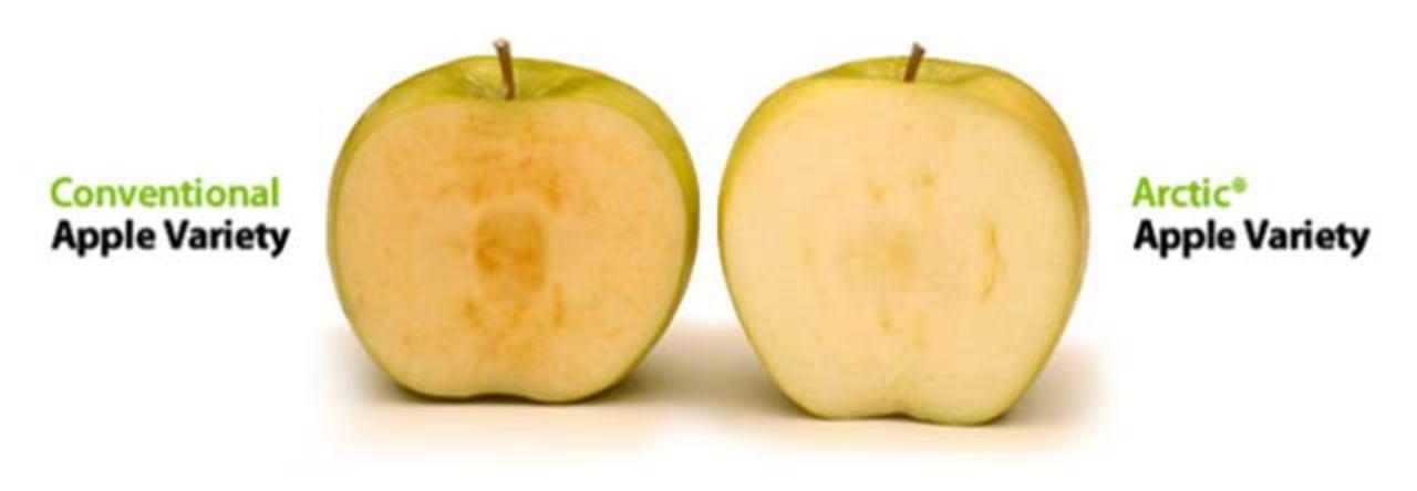 時間がたっても茶色くならない遺伝子組み換えりんご
