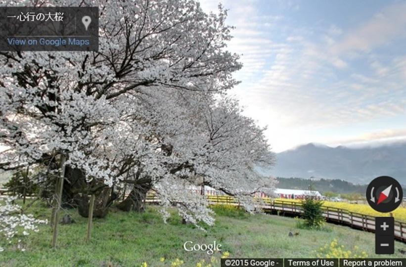 桜を見に行こう。ストリートビューで