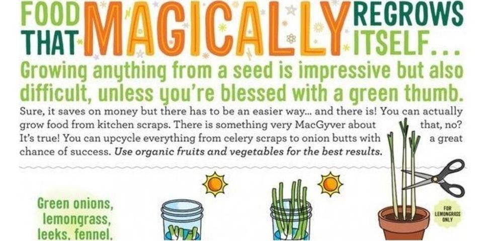 野菜くずからまた育つ野菜たち