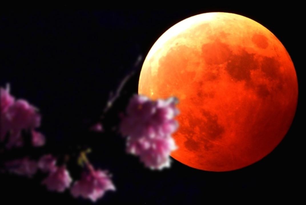 4月4日は「月食」x「桜」。月食花見と洒落込みません?