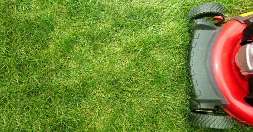 iRobotと天文学者、芝刈りルンバでバトル中…って?