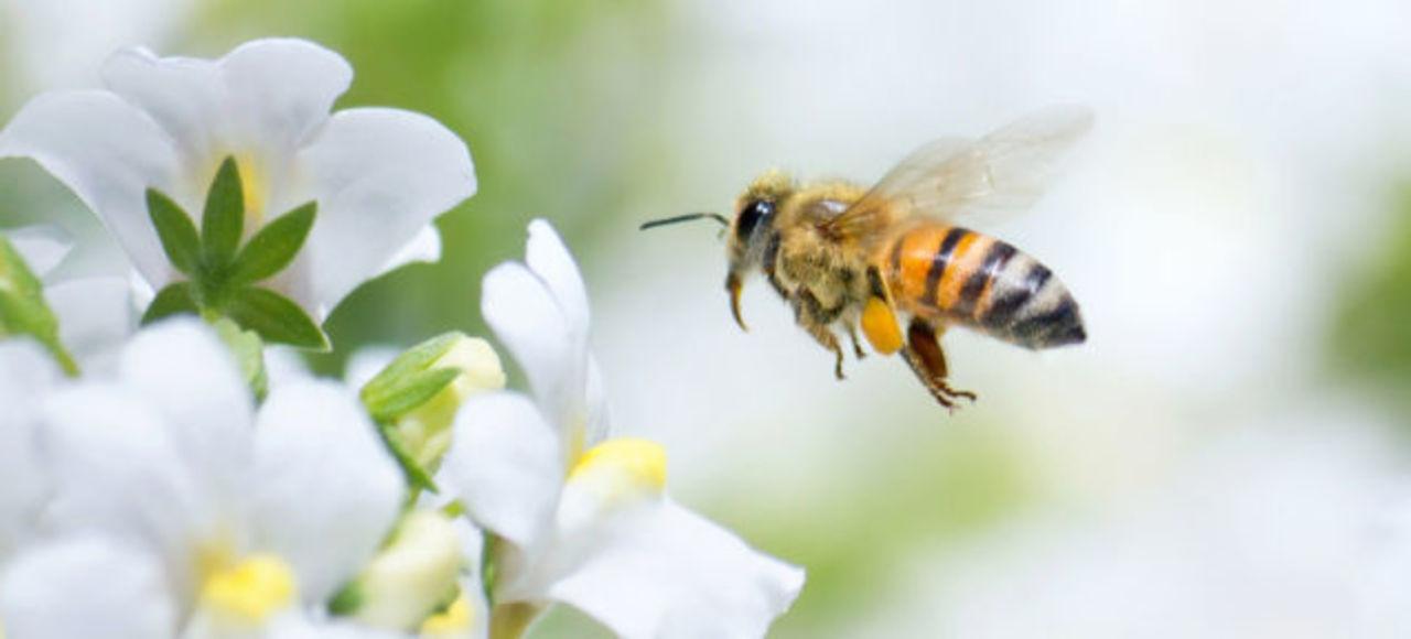 農薬でハチがハイになる…! ネオニコチノイド系農薬の新たな事実が発覚