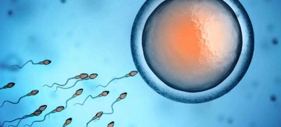 体外受精の光となるか? 精子トラッキング技術に注目