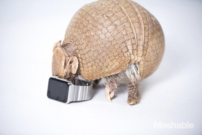 動物たちによるApple Watchレビュー