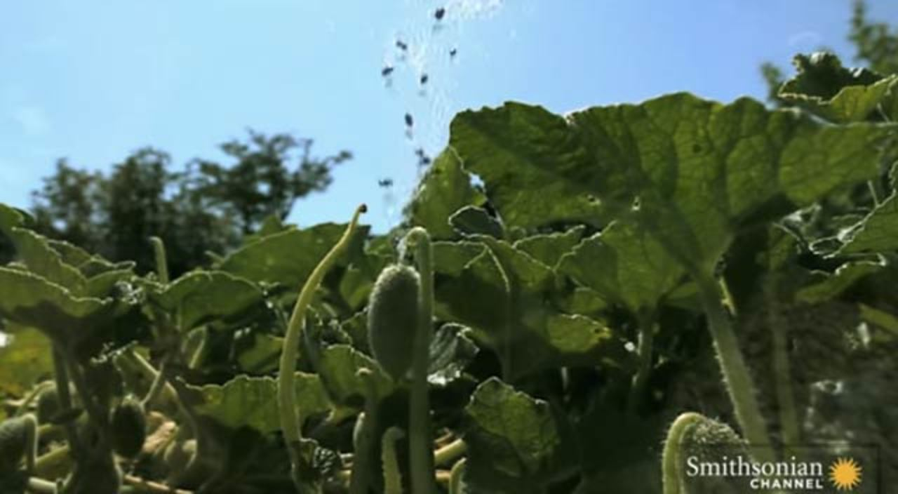 植物のブシャー映像、スローでブシャー、種の保存でブシャー、思った以上にブシャー
