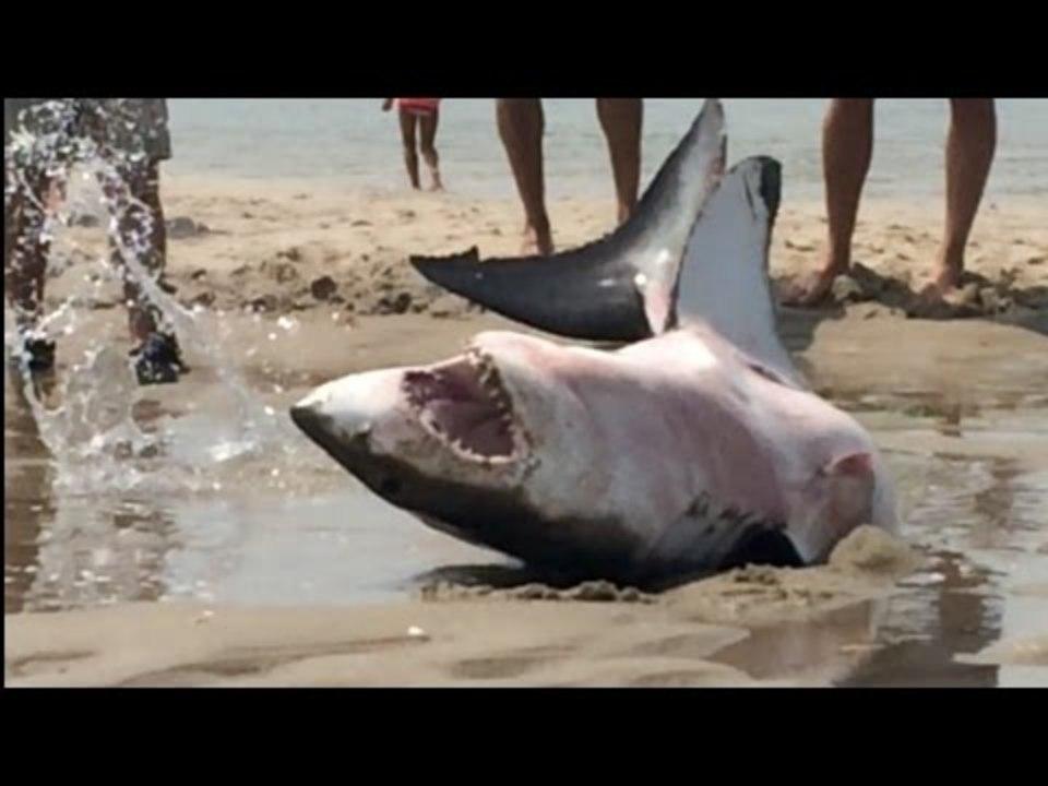 陸に打ち上げられたサメが怖い