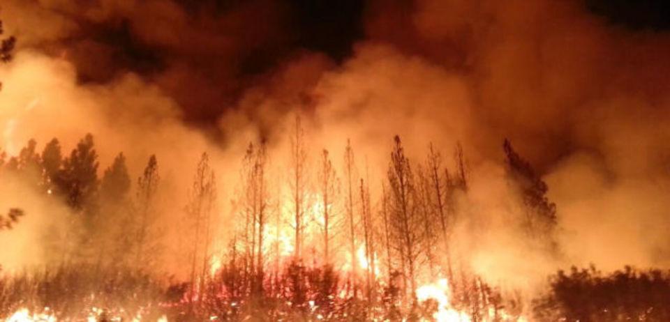 地球温暖化によって増える野火