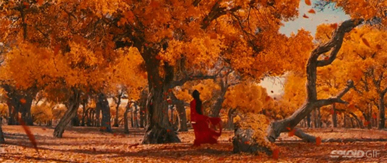 史上最も美しかった映画トップ10