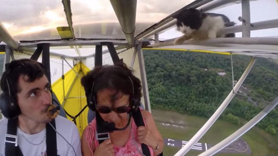 たぶん翼に猫を乗せて大空へいったのは世界初では?