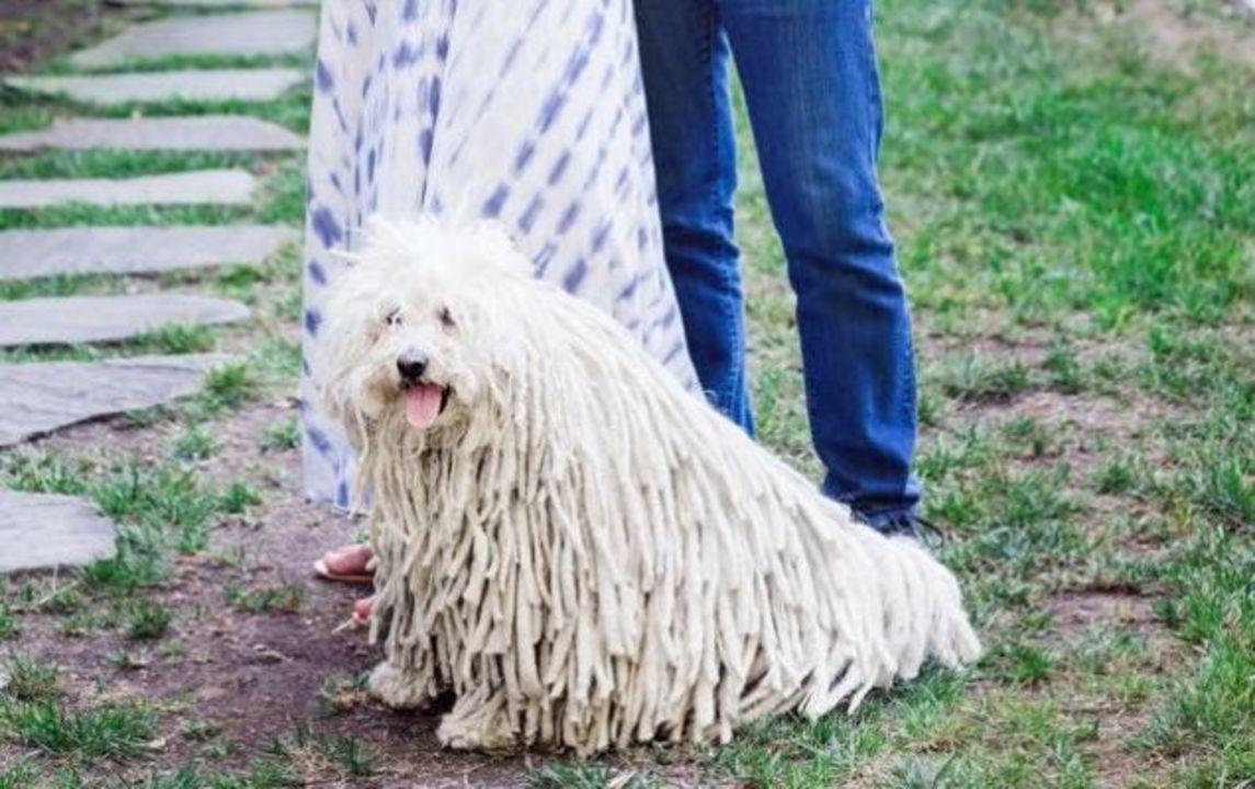 ザッカーバーグおめでとう! でもその犬のほうが気になるよ