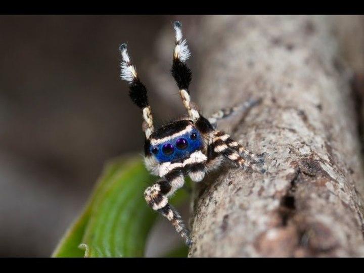 「おーい、やっほー」手を振るシマシマのクモがカワイイ